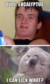 Koala Bear Meme - super high koala bear memebase funny memes