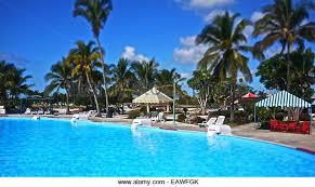 swimming pool palm trees near stock photos swimming pool palm