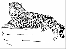 great realistic animal coloring pages with jungle animals coloring