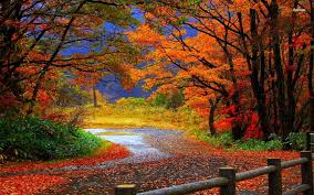 fall desktop pic 37 desktop images of autumn forest autumn forest wallpapers