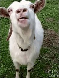 Funny Goat Memes - goat gifs get the best gif on giphy