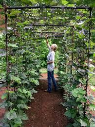 backyard vegetable garden gardening ideas