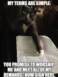 Silly Cat Memes - deluxe funny cat memes funniest cat memes uk cat breeders kayak
