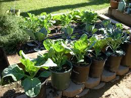 2010 winter vegetable garden blog week 5