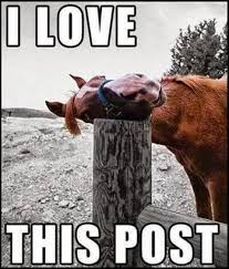 Gay Horse Meme - 25 very funny horse meme pictures of all the time