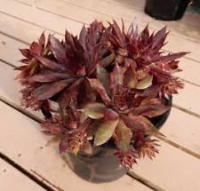 partial shade medium watering cactus succulent plants ebay
