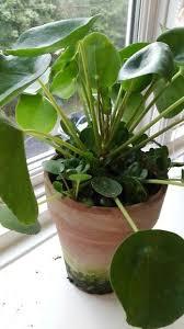 Indoor Plant Arrangements 1901 Best Platiii Images On Pinterest Plants Indoor Plants And