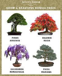 nature s blossom bonsai tree germination kit nifty homestead