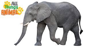 elephants animals for children kids videos kindergarten