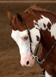 1067 best horses images on pinterest horses beautiful and