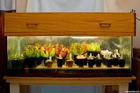 the carnivorous plant faq the carnivorous plant terrarium