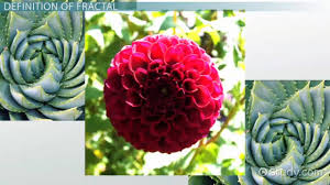fractals in math definition u0026 description video u0026 lesson