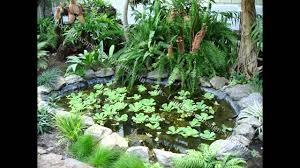 small home garden pond ideas youtube