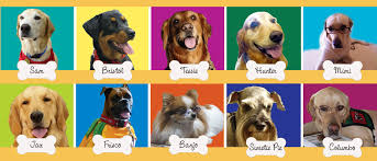 paws to read temecula ca