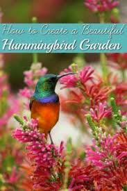How To Create A Beautiful Backyard 9 Best Beautiful White Eared Hummingbird Photography Images On