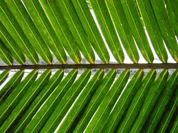 palm leaves for palm sunday palm sunday addie zierman
