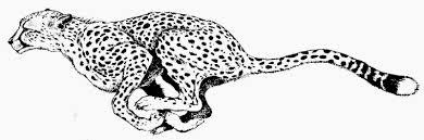 cheetah print black and white clipart kid clipartix