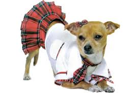 Chihuahua Halloween Costumes Halloween Costumes U2026 Dogs Salon