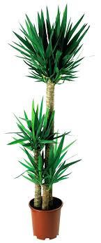 plante verte chambre à coucher quelle plante pour une chambre 5 plantes pour purifier votre
