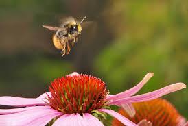 Types Of Garden Trees Plant A Bee Garden The Honeybee Conservancy