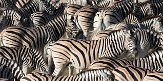 richard bernabe nature wildlife travel photography