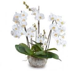 artificial orchids artificial orchid arrangement foter