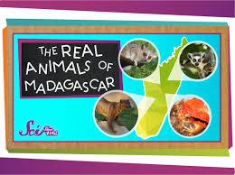 native plants of madagascar the real animals of madagascar youtube