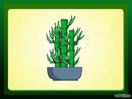 best 25 bamboo house plant ideas on palm house plants