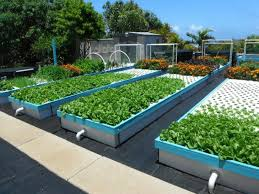 backyard and commercial aquaponics are easier and profitable using