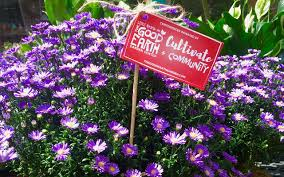 earth tones native plant nursery voted the most revolutionary garden center in america the good