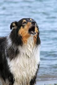 comment empecher mon chien de monter sur le canapé education chienpagesepsitename