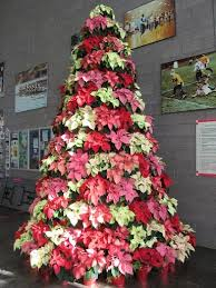 17 best not your average poinsettia images on
