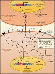 molecular mechanisms of fear learning and memory cell