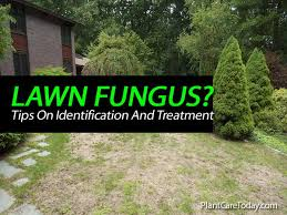 Types Of Garden Fungus - tips on identification and treatment of lawn fungus