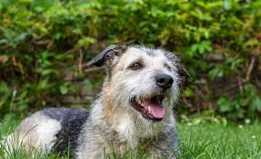 Temporary Blindness In Dogs Why Do Dogs Get Seizures Canna Pet