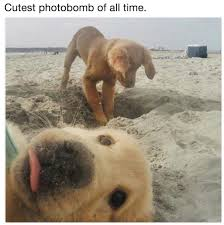 Memes Funny Animals - pin by hil mat on for spouse pinterest animal dog and funny animal