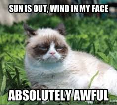 Grumpy Meme Face - 32 funny angry cat memes for any occasion freemake