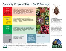 things to know about stink bugs simplemost