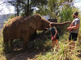 where to play interact and spend time with elephants in thailand