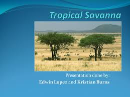 Tropical Savanna Dominant Plants - presentation done by edwin lopez and kristian burns ppt download