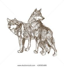 wolf sketch drawing isolated on white stock vector 215650066