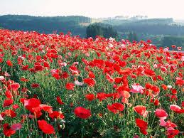 most beautiful flower wallpapers sweet flowers delights