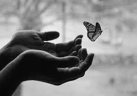 butterfly award damers