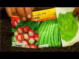 vegetable gardening how to plant a vegetable garden for children