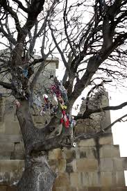 file jivari monastery mtskheta a tree with cloth