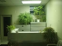 unique indoor plants modern most unusual house plants gardening