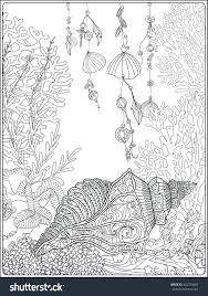 sea shells coloring pages free printable seashell sheets beach