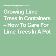 best 25 lime trees ideas on green fence family
