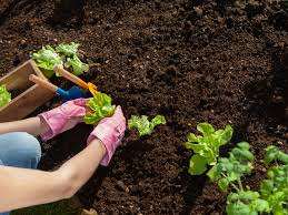 how to grow your best vegetable garden ever