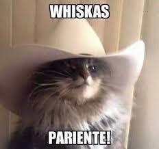 Gato Meme - dopl3r com memes whiskas pariente con este gato y su sombrero